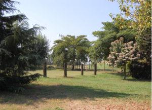 Allevamento Chow Chow Ceppo Rosso - una parte del giardino