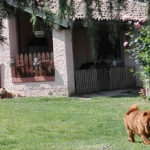 Ceppo Rosso Chow Chow